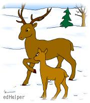 First Day of Winter<BR>Fawn Meets Winter