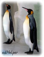 Penguin Appreciation Day<BR>Clowns of the Bird World