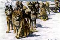 Iditarod Sled Dog Race<BR>The Iditarod
