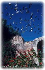 Swallows Return Day<BR>Swallows Return To Capistrano