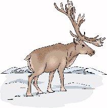 Reindeer | edHelper com