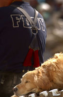 9-11 Search Dogs