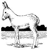the man the boy and the donkey summary