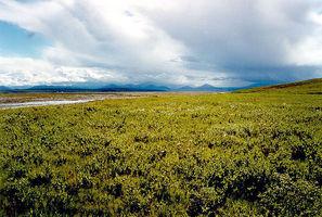 La Tundra Ártica