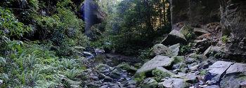 The Rainforest | edHelper com