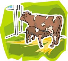 A Calf for Marti
