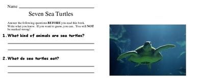 Seven Sea Turtles