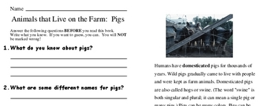 Animals that Live on the Farm:  Pigs