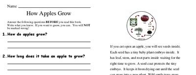 How Apples Grow