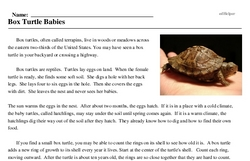 Print <i>Box Turtle Babies</i> reading comprehension.