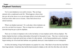 Print <i>Elephant Sanctuary</i> reading comprehension.