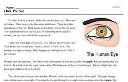 Print <i>How We See</i> reading comprehension.