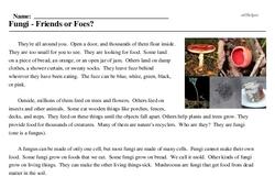 Print <i>Fungi - Friends or Foes?</i> reading comprehension.