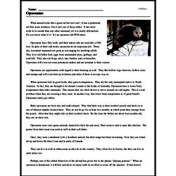 Print <i>Opossums</i> reading comprehension.