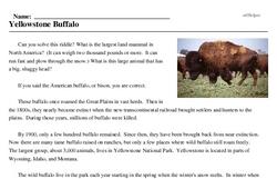 Print <i>Yellowstone Buffalo</i> reading comprehension.
