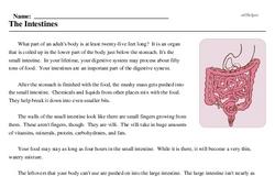 Print <i>The Intestines</i> reading comprehension.