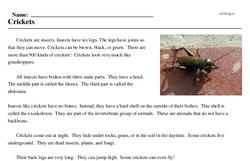 Print <i>Crickets</i> reading comprehension.