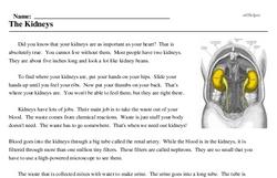 Print <i>The Kidneys</i> reading comprehension.