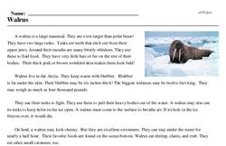 Print <i>Walrus</i> reading comprehension.