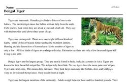 Print <i>Bengal Tiger</i> reading comprehension.