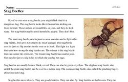 Print <i>Stag Beetles</i> reading comprehension.
