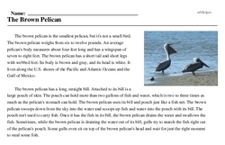 Print <i>The Brown Pelican</i> reading comprehension.