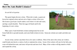 Print <i>How Do Ants Build Colonies?</i> reading comprehension.