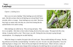 Print <i>Ladybugs</i> reading comprehension.
