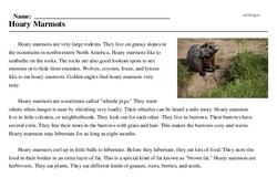 Print <i>Hoary Marmots</i> reading comprehension.