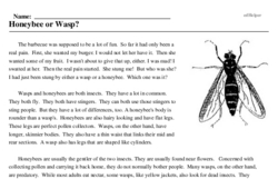 Print <i>Honeybee or Wasp?</i> reading comprehension.