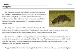 Print <i>Platypus</i> reading comprehension.