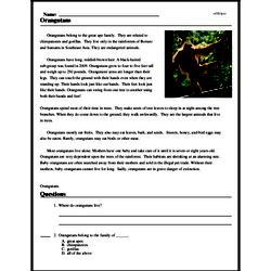 Print <i>Orangutans</i> reading comprehension.