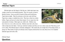 Print <i>Siberian Tigers</i> reading comprehension.