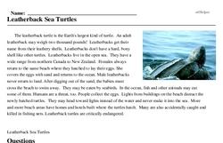 Print <i>Leatherback Sea Turtles</i> reading comprehension.