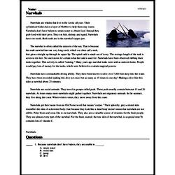 Print <i>Narwhals</i> reading comprehension.