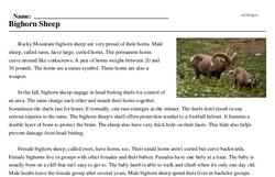 Print <i>Bighorn Sheep</i> reading comprehension.
