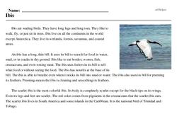 Print <i>Ibis</i> reading comprehension.