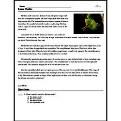 Print <i>Luna Moths</i> reading comprehension.