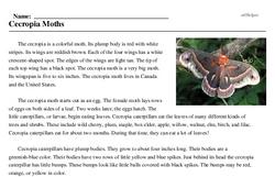 Print <i>Cecropia Moths</i> reading comprehension.