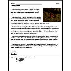 Print <i>Camel Spiders</i> reading comprehension.