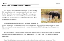Print <i>What Are Warm Blooded Animals?</i> reading comprehension.
