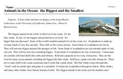 Print <i>Animals in the Ocean: the Biggest and the Smallest</i> reading comprehension.