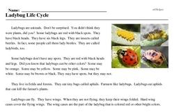 Print <i>Ladybug Life Cycle</i> reading comprehension.