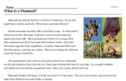 Print <i>What Is a Mammal?</i> reading comprehension.