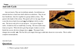 Print <i>Ant Life Cycle</i> reading comprehension.