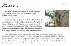 Print <i>Cicada Life Cycle</i> reading comprehension.