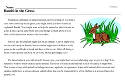 Print <i>Bambi in the Grass</i> reading comprehension.
