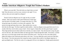 Print <i>Female American Alligators: Tough (but Tender!) Mothers</i> reading comprehension.